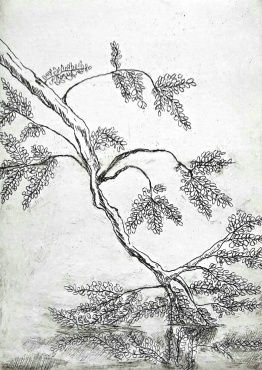 genevieve guadalupe davis etching