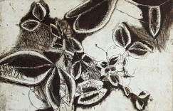 genevieve guadalupe plantule etching