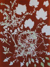 genevieve guadalupe botanica 9 monoprint 76x56cm 2020